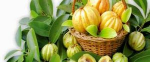 Healthy life garcinia cambogia - bluff - test - Forum