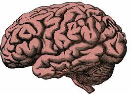 Neurocyclin - för bättre minne- sverige - nyttigt - apoteket